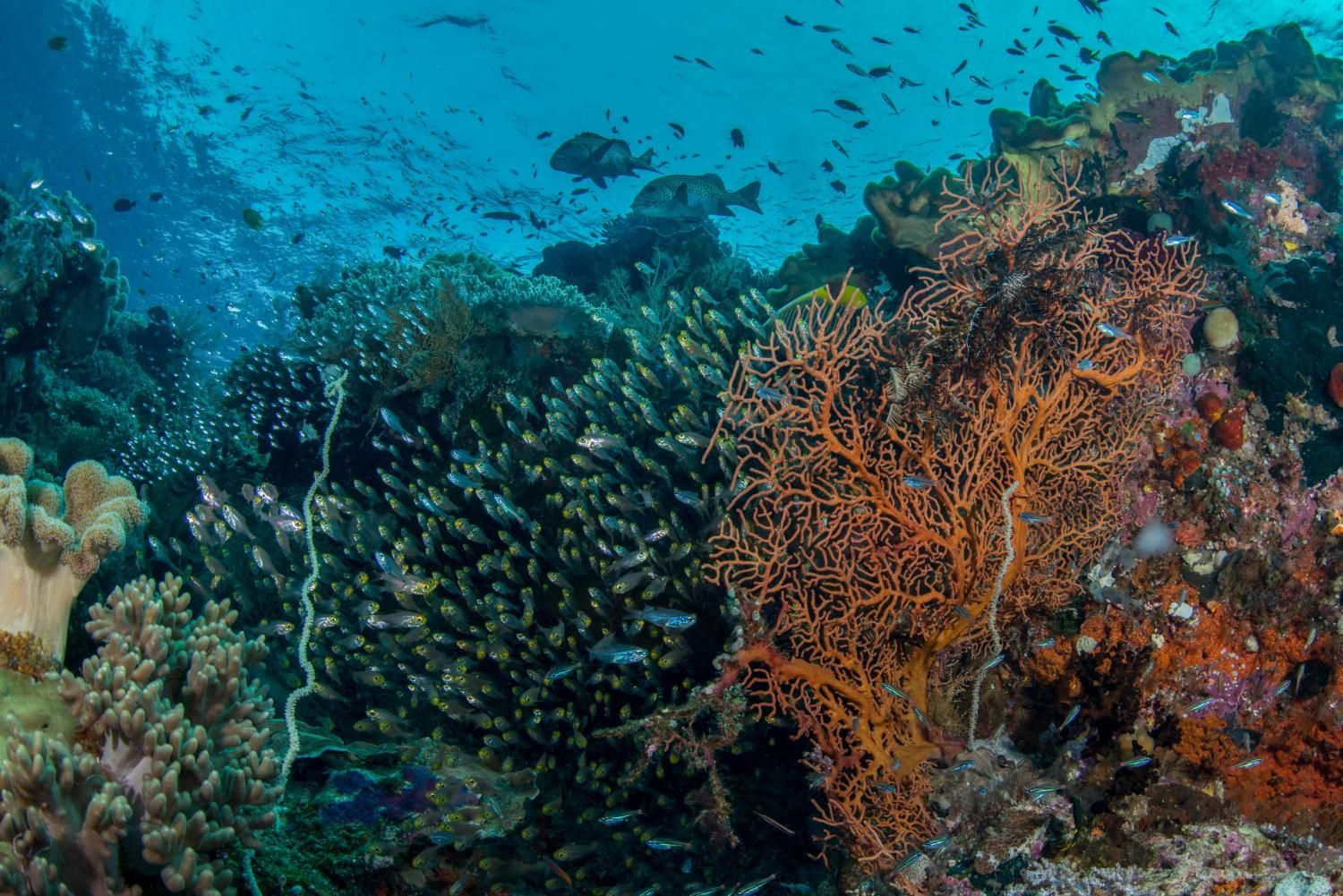 Diverse Fish Communities More Productive And Resistant To