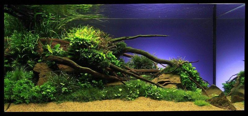 Aquarium Aquascape Design Ideas Picture Modern Layout With Tree
