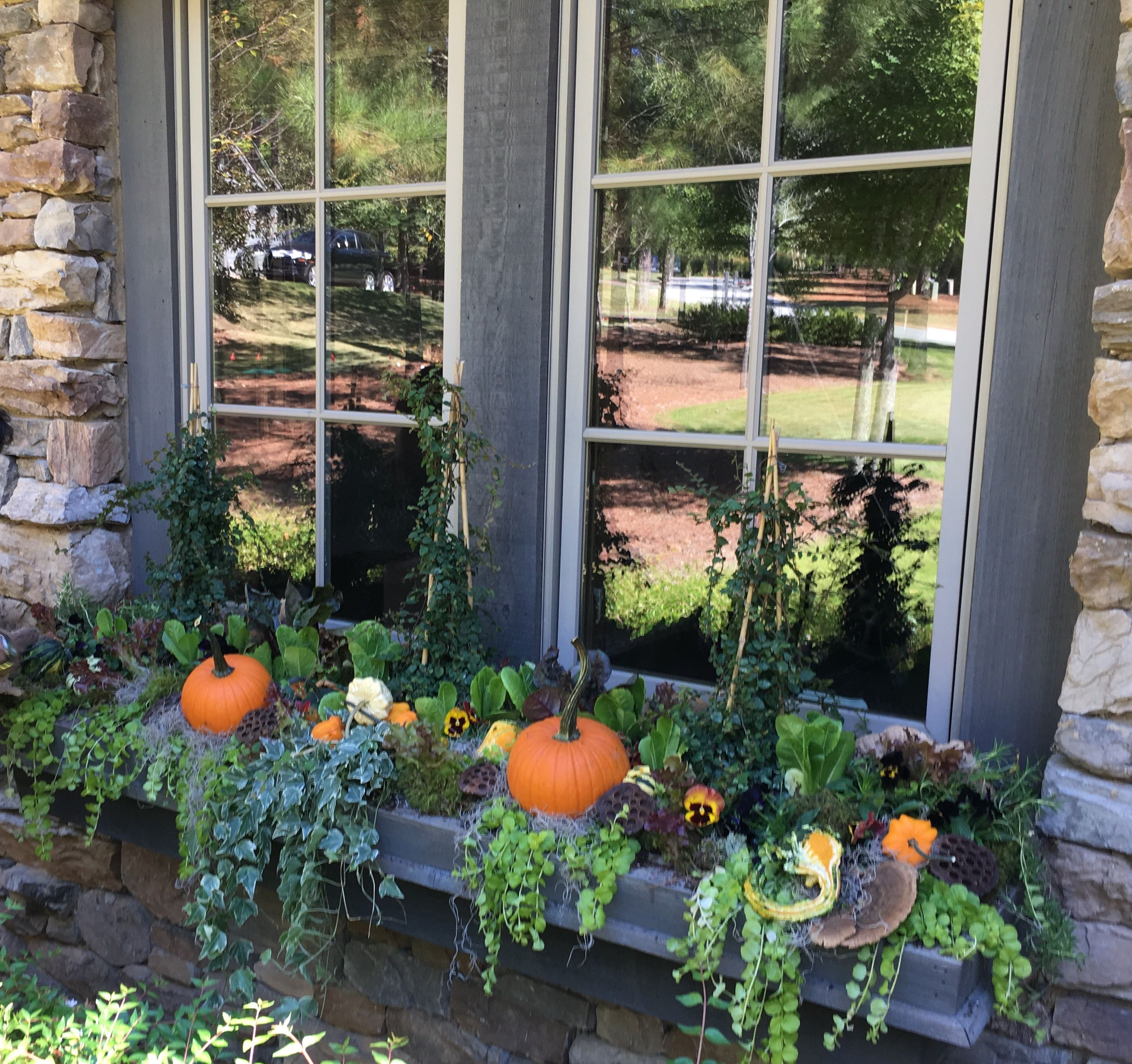 Pumpkin window boxes are always a good idea. _____________________⠀⠀⠀⠀⠀⠀⠀⠀⠀⠀⠀⠀⠀⠀⠀⠀⠀⠀ ⠀⠀⠀⠀⠀⠀⠀⠀⠀⠀⠀⠀⠀⠀⠀⠀⠀⠀ #zebgrantdesign #florals #homedecor #gifts #shoplocal #shopsmall #madisonGA #interiors #events #fall #home #uniqueflowers #instaflowers #petals #flowersofinstagram #fallwedding #southernweddings #bridalbouquet #uniquebouquet #atlwedding #madisonwedding #blue #bouquet #floraldesign #uniqueflowers #instaflowers #newarrivals