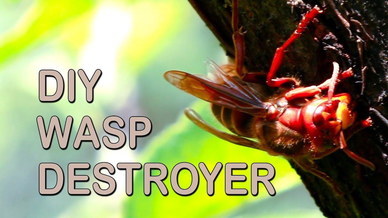 How To Get Rid Of Wasps in 2020 Wesp, Tips, Handige tips