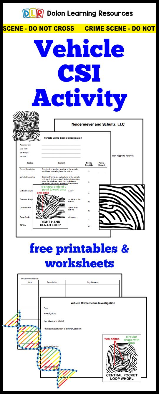 free forensic science activity with worksheets – Forensic Entomology Worksheet
