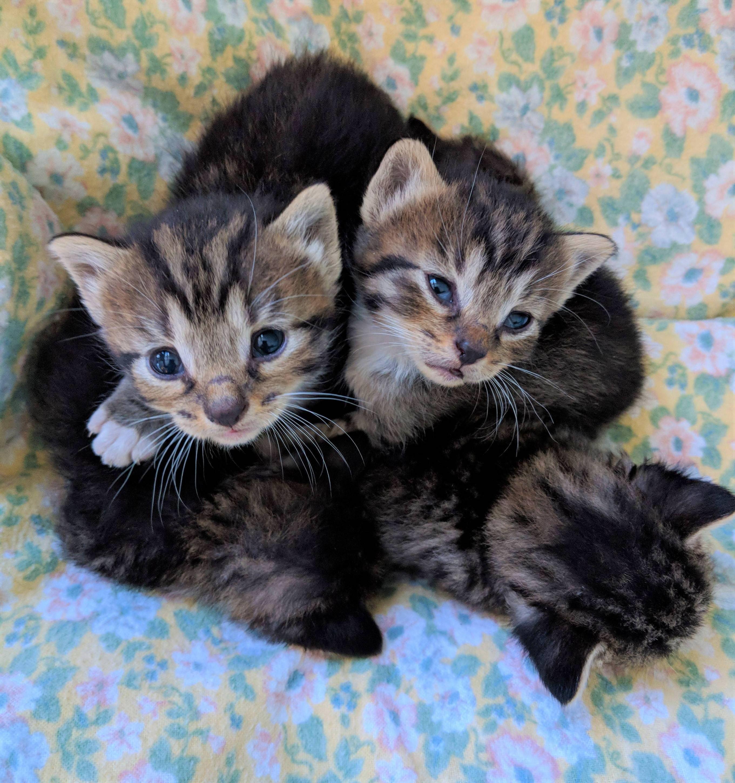 Beautiful 2 Week Old Kittens In A Tiny Little Kitten Heaphttps I Imgur Com 62j3q4m Jpg Little Kittens Cute Puppies Kittens