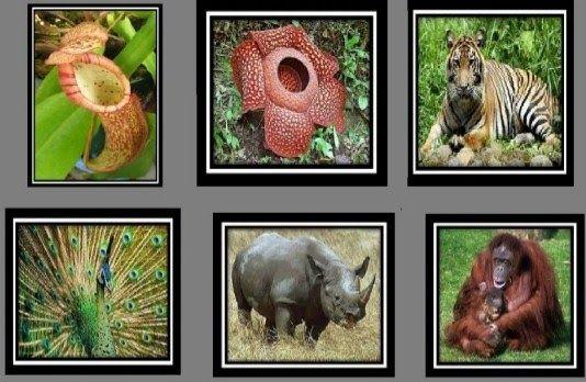 Download Gambar Fauna Di Indonesia 10 Fauna Dan Flora Terlangka Di Indonesia Flora Dan Fauna 12 Most Endangered Animals National Animal Endangered Animals