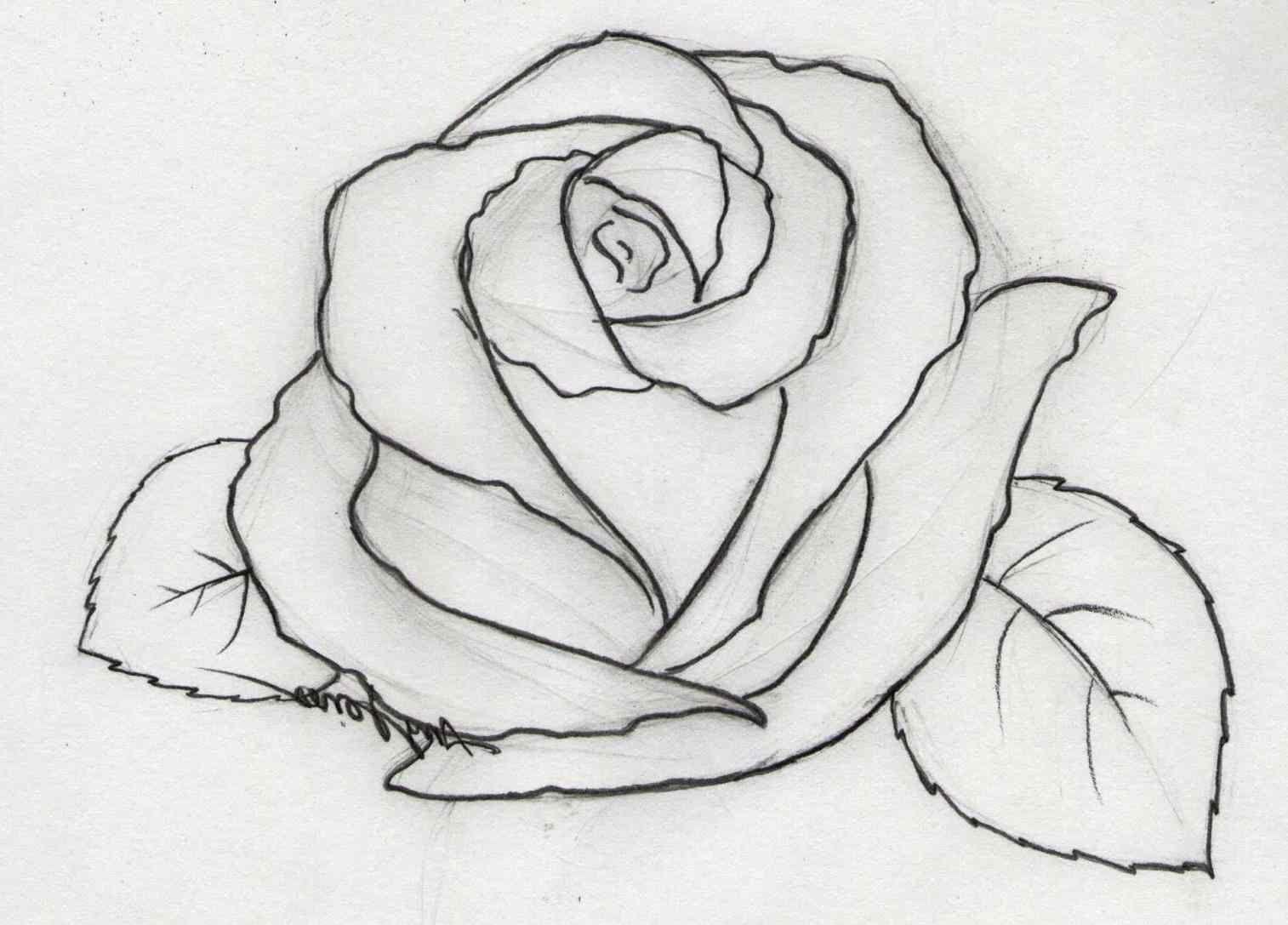 Pencil Drawing Rose Flowers Easy Flower Drawings In Jpg - Rose ...
