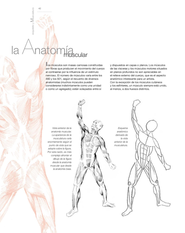 Aula de dibujo - Dibujo de Anatomía Artística | Anatomia(Dibujo ...