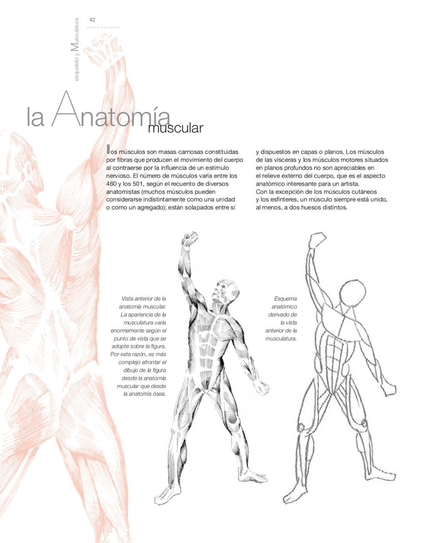 Aula de dibujo - Dibujo de Anatomía Artística | Pinterest