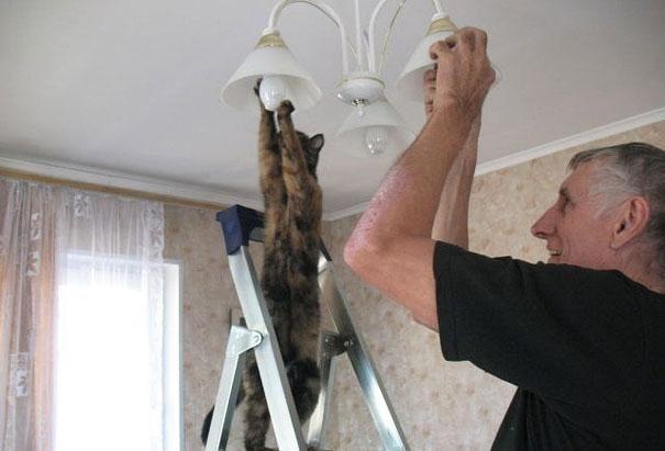 Nämä lemmikit taisivat unohtaa, miten eläimien tulisi käyttäytyä   Vivas