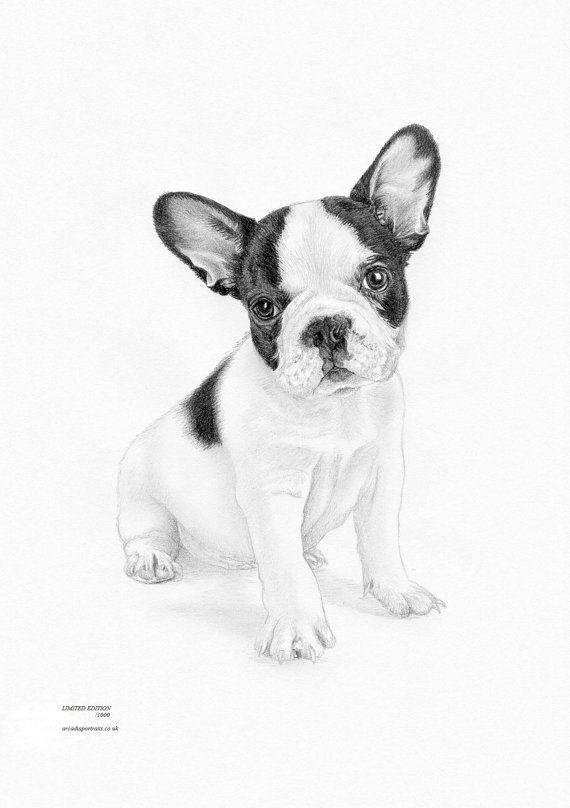 Arte de edición limitada de cachorro BULLDOG francés dibujo grabado ...