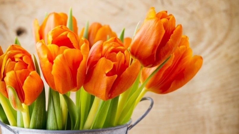 Beautiful Orange Tulips Wallpaper Flowers In 2019 Flower