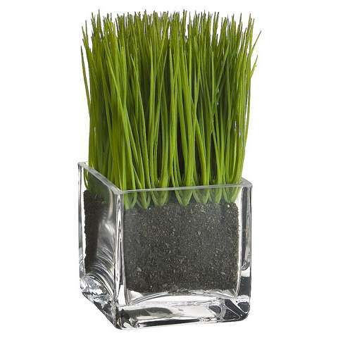 Grass potted in glass square vase I would make it a bigger ...