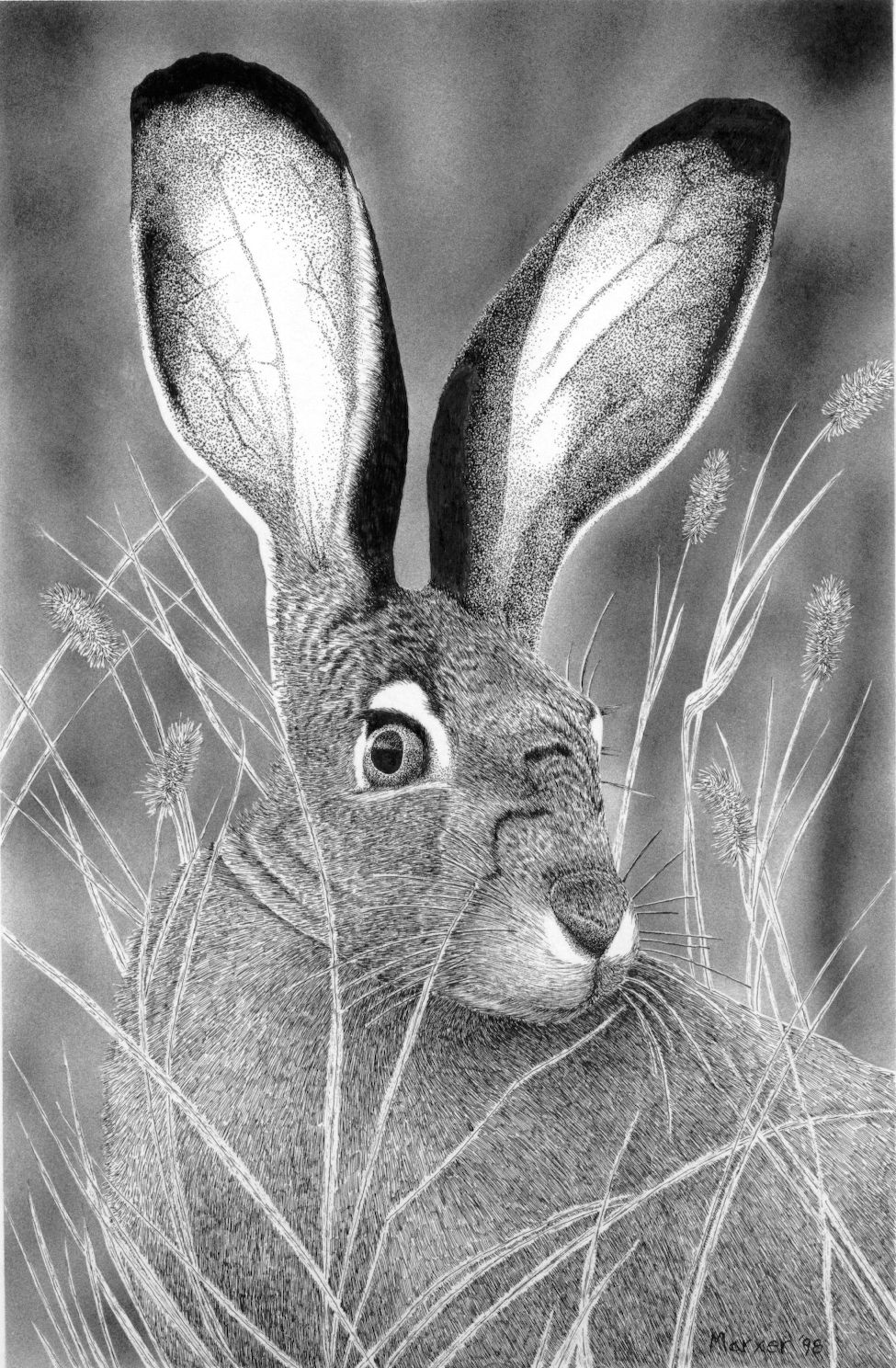 Jack Rabbit - Pen & India Ink  with Airbrushed background  1998 - by David Marxer