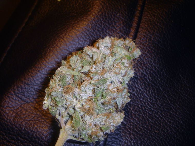 Black Domina #Reefer