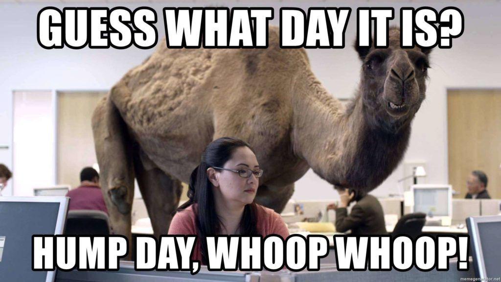 Top 23 Work Humor Memes Funny Hump Day Memes Funny Memes Happy Hump Day Meme