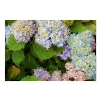 Watercolor Hydrangeas Flowers Poster