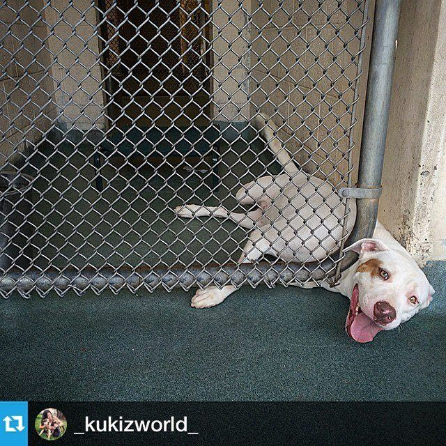 Miami Dade Animal Shelter This angel was surrendered