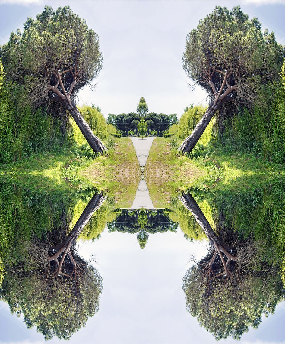 Mirror inclined pine trees in a surreal scene #landscape #pine #mirrored #tree #specular #bark #green  #background #surreal