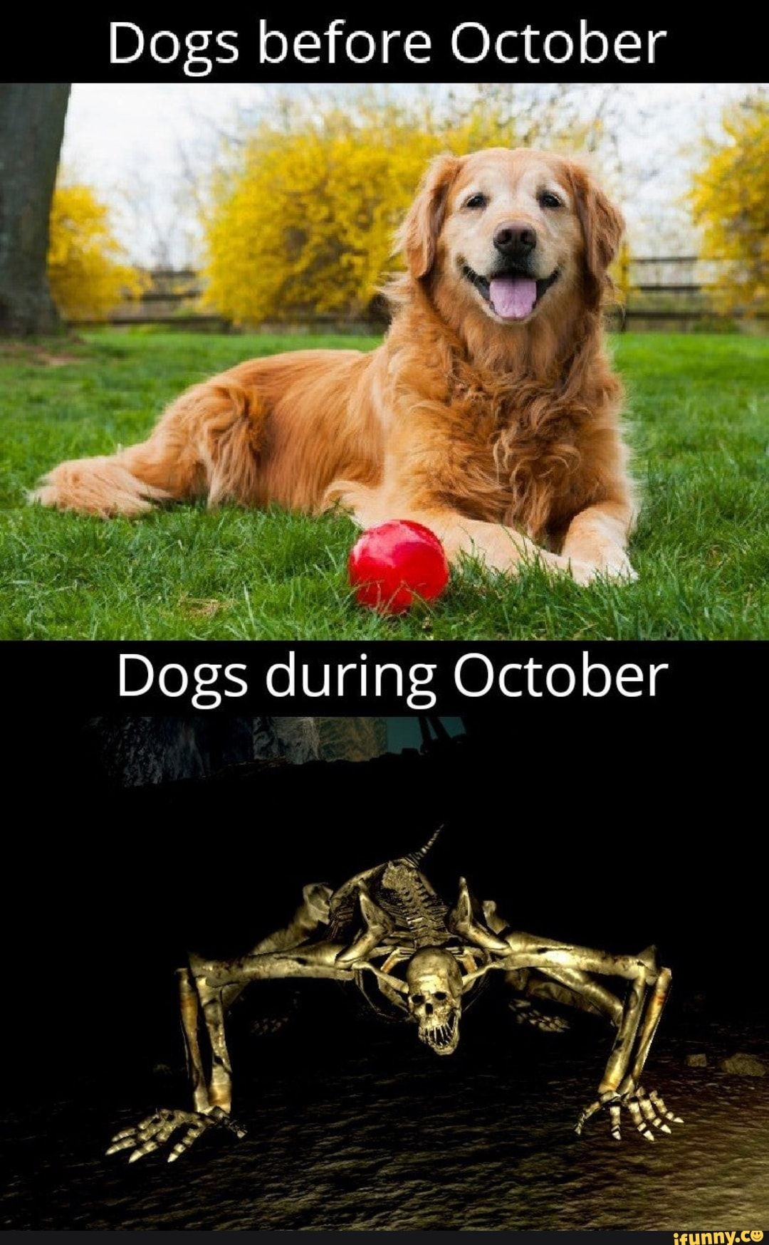 Dogs before October iFunny ) in 2020 Dogs, Memes, Animals