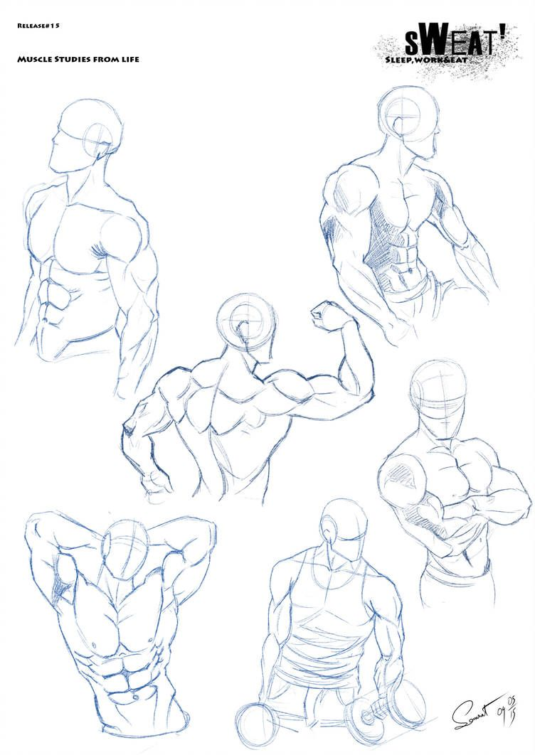 Sweat Release 15 Muscle Studies From Life By Dracowormart Male Torso Poses Drawing Reference Poses Drawings Art Reference