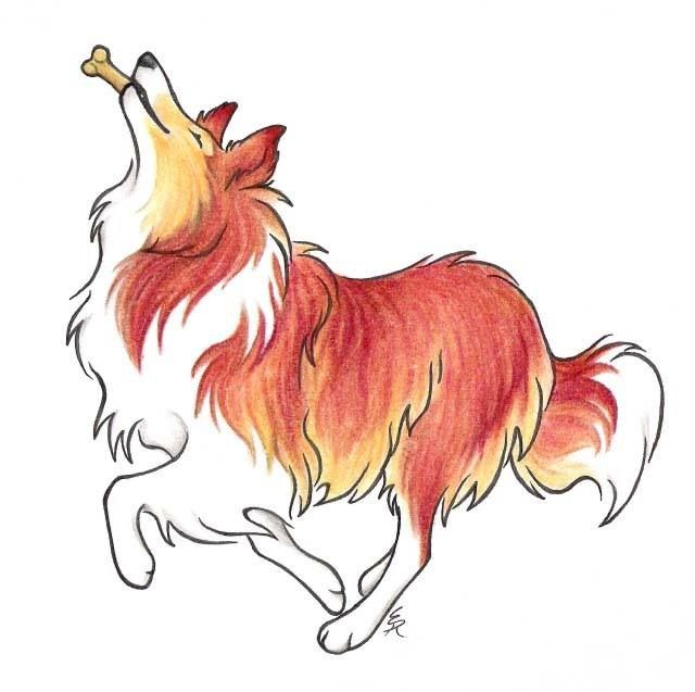 Collie Luv Dog Drawing Rough Collie Collie Dog