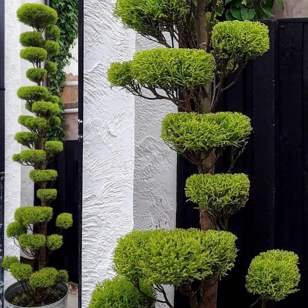 "Cat Black on Instagram: ""#topiary #topiaries #gardening # ..."