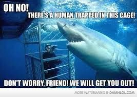 there is a human trapped in this cage - Google Search shark funny