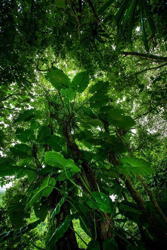 Rainforest Hike, Saba