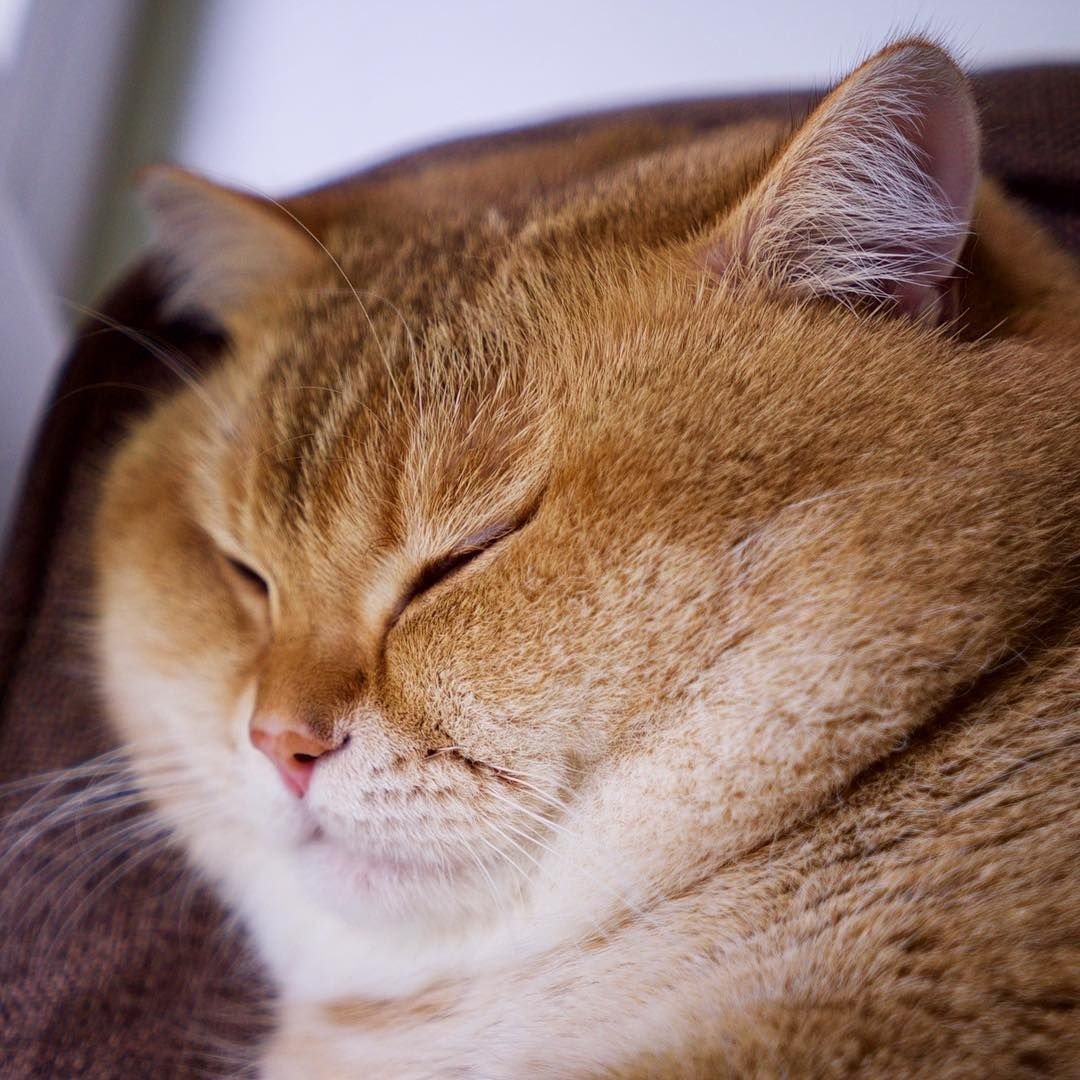Silence. I'm sleeping 😴