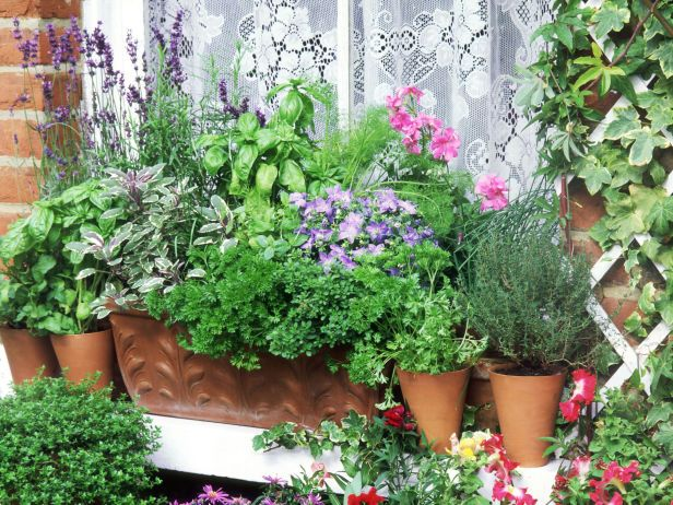 95729c78a61 Favorite Herbs Grouped on Window Sill Garden Favorite herbs can be grown  with ease on sunny windowsills in pots of varying sizes. Sage, parsley,  rosemary ...