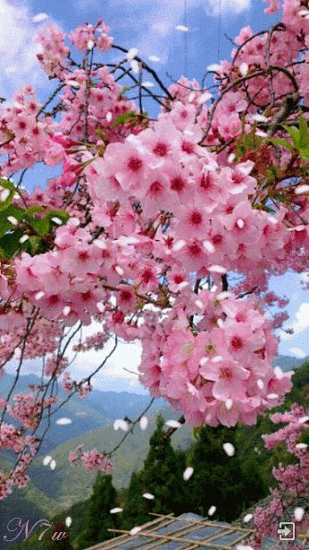 Welcome - Woman Beautiful Gif - Pictures to YouBem-vindo Fotos - cherry blossom animated