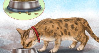 Drive Long Distance With A Cat Dog Cat Cat With Blue Eyes Adventure Cat