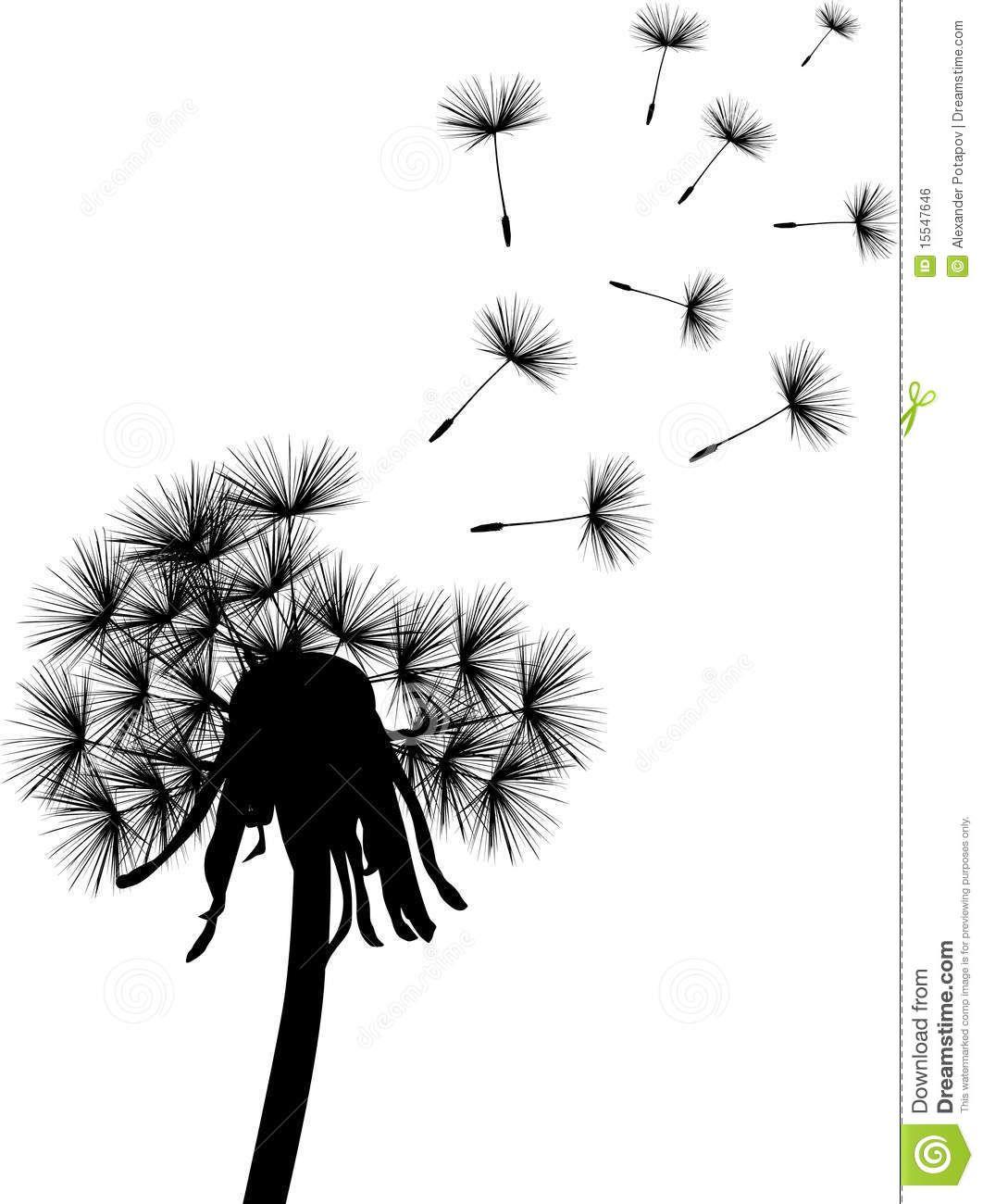 Black Dandelion Plant Royalty Free Stock Image Image 15547646 Dandelion Plant Dandelion Plants