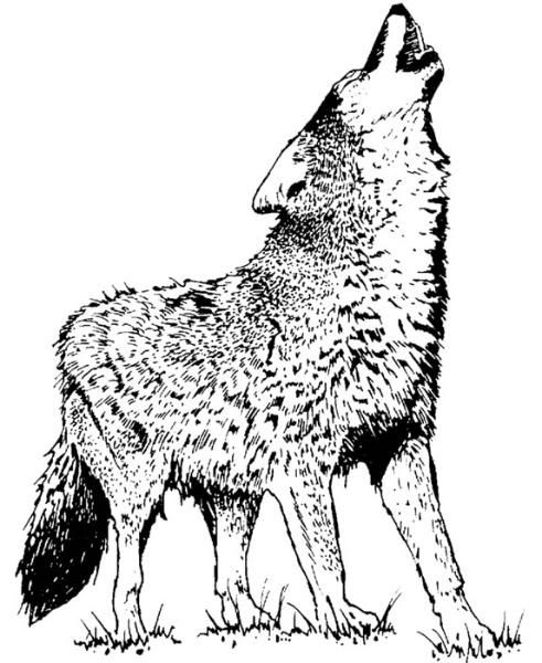 View The Slideshow On Photobucket Wolf Colors Horse Coloring Pages Deer Coloring Pages