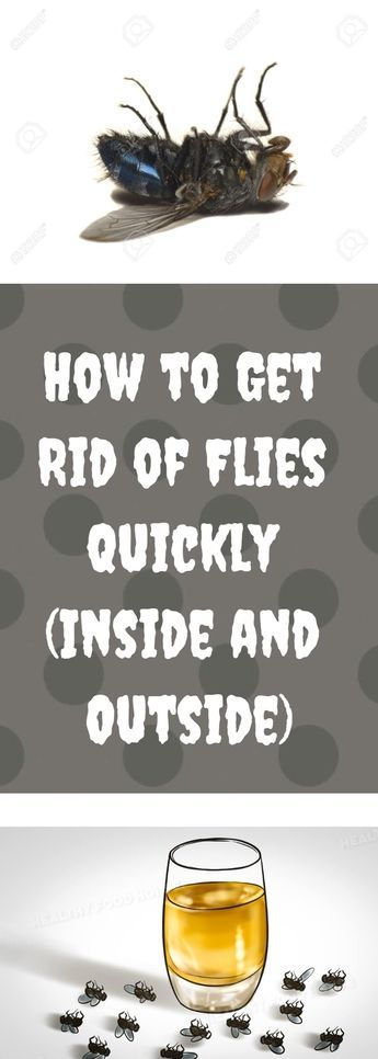 how to prevent house flies