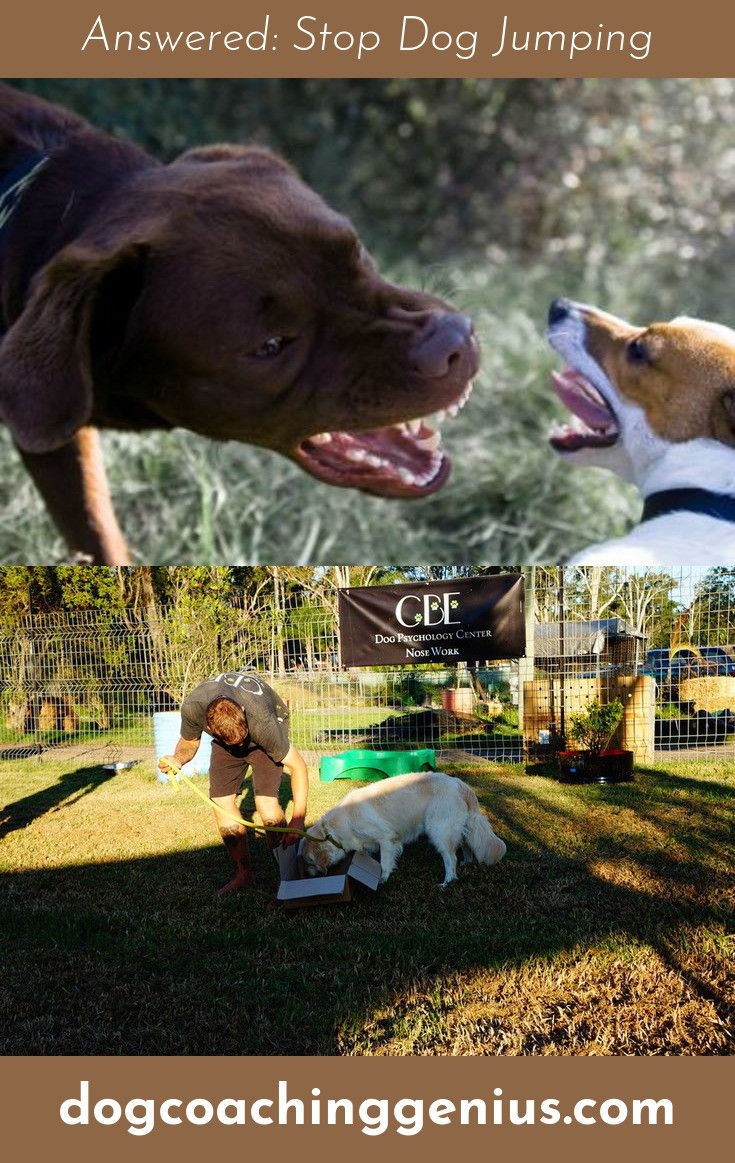 Want to know more about Dog Barking Funny Dogs