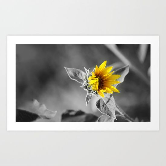 Sunflower interior art print yellow main color accent photography