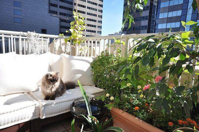 die besten 25 pflanzen f r balkon ideen auf pinterest. Black Bedroom Furniture Sets. Home Design Ideas