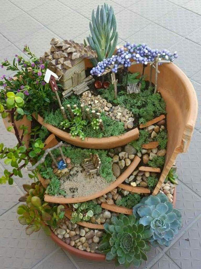 Pin von Chandra Knoke auf Beautiful Succulents, Cacti & Rare Plants ...