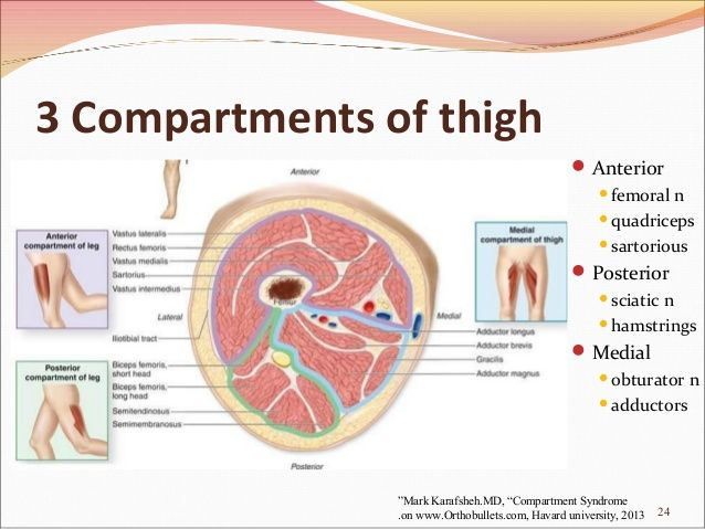 compartments thigh - Google Search | School | Pinterest | Medicine