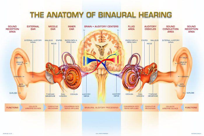 Binaural hearing aid providing more natural hearing to people by binaural hearing aid providing more natural hearing to people by using aids in both ears ccuart Gallery