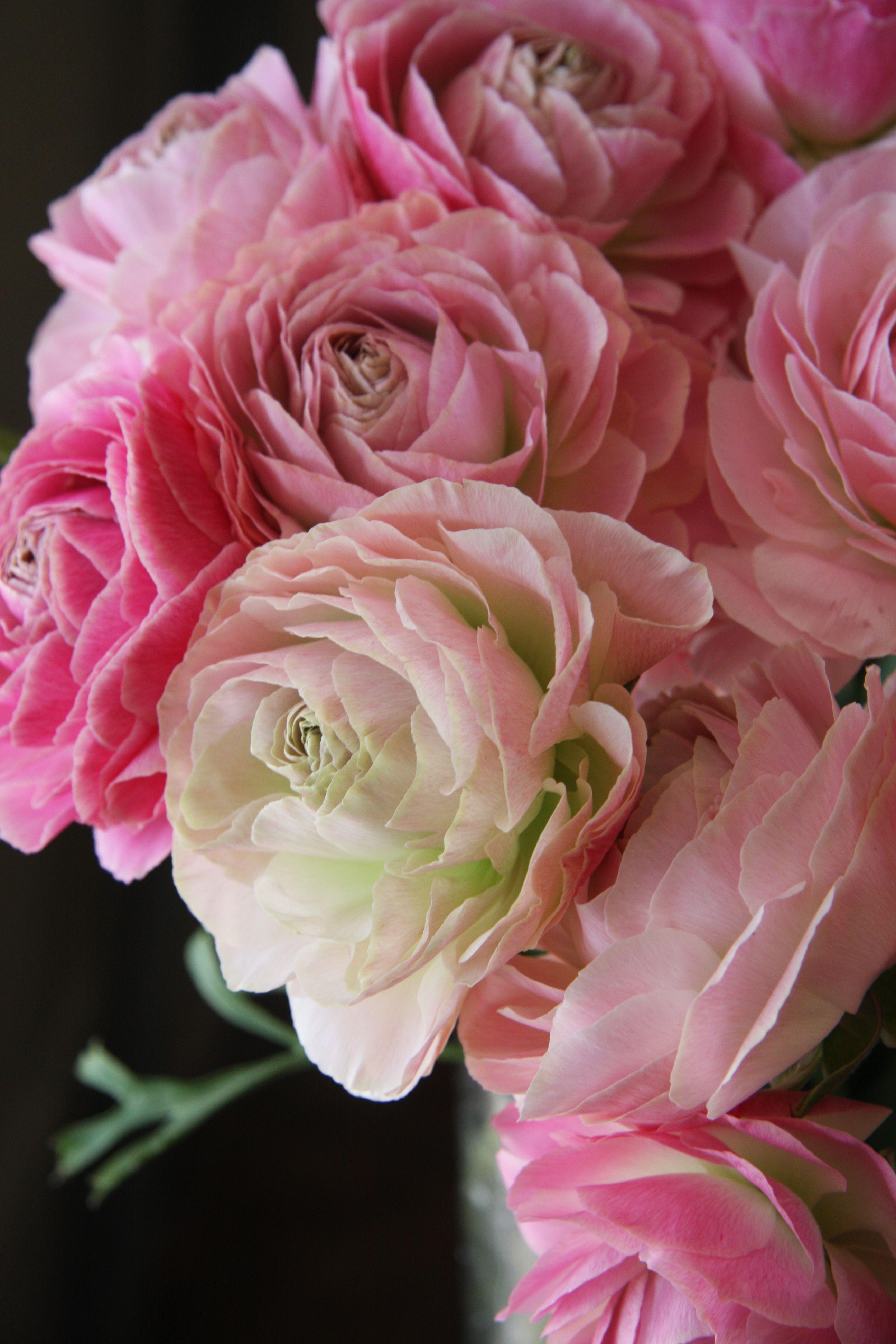 ranunculus pink | Weddings | Pinterest | Ranunculus, Gardens and Flowers