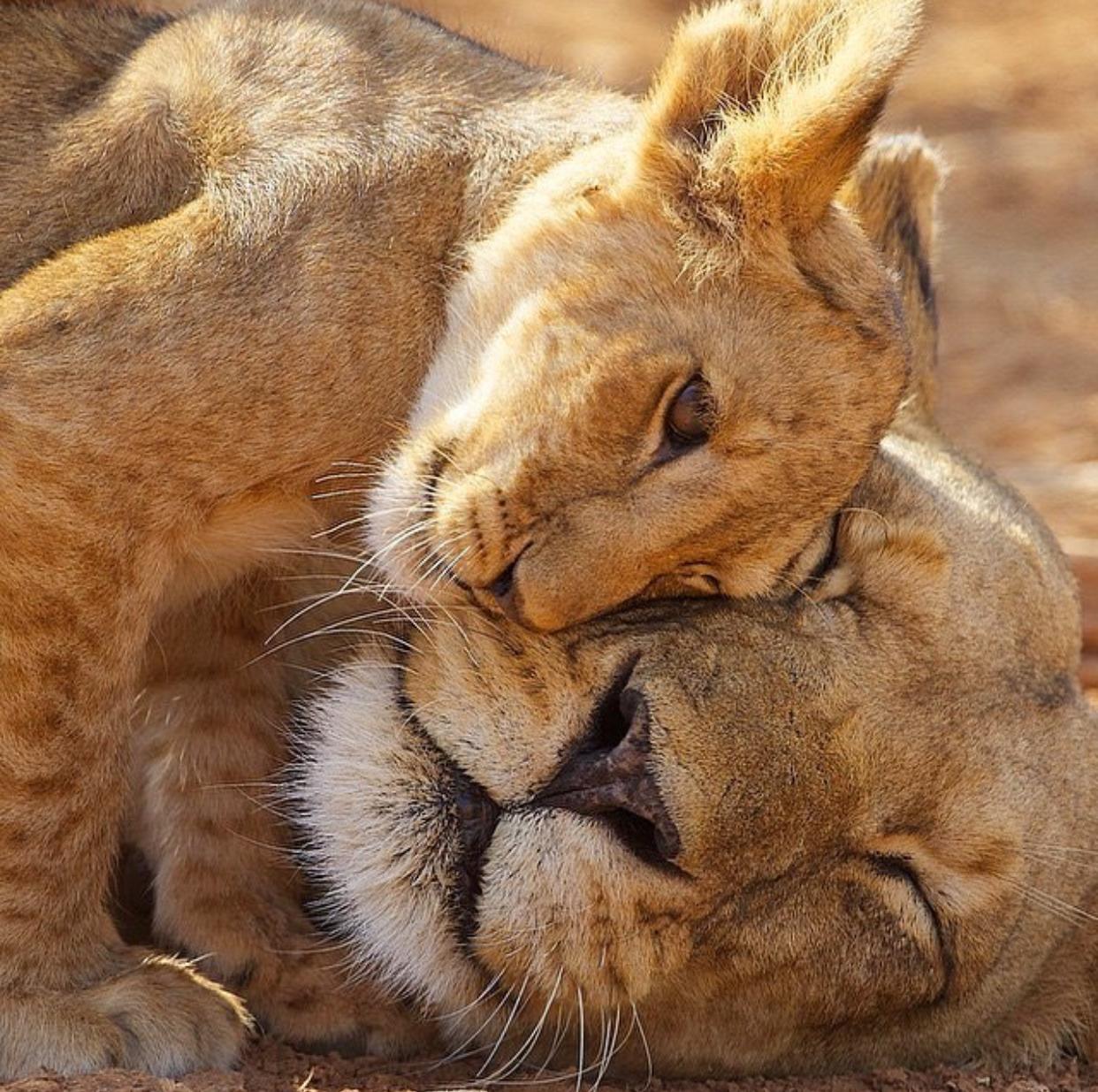 Картинки обниманий животных