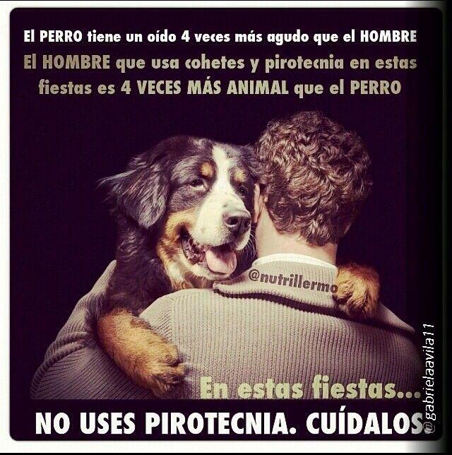 No Uses Pirotecnia Perros Frases Perros Amor De Perro