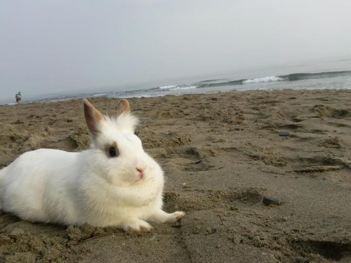 My bunny loves the beach <3
