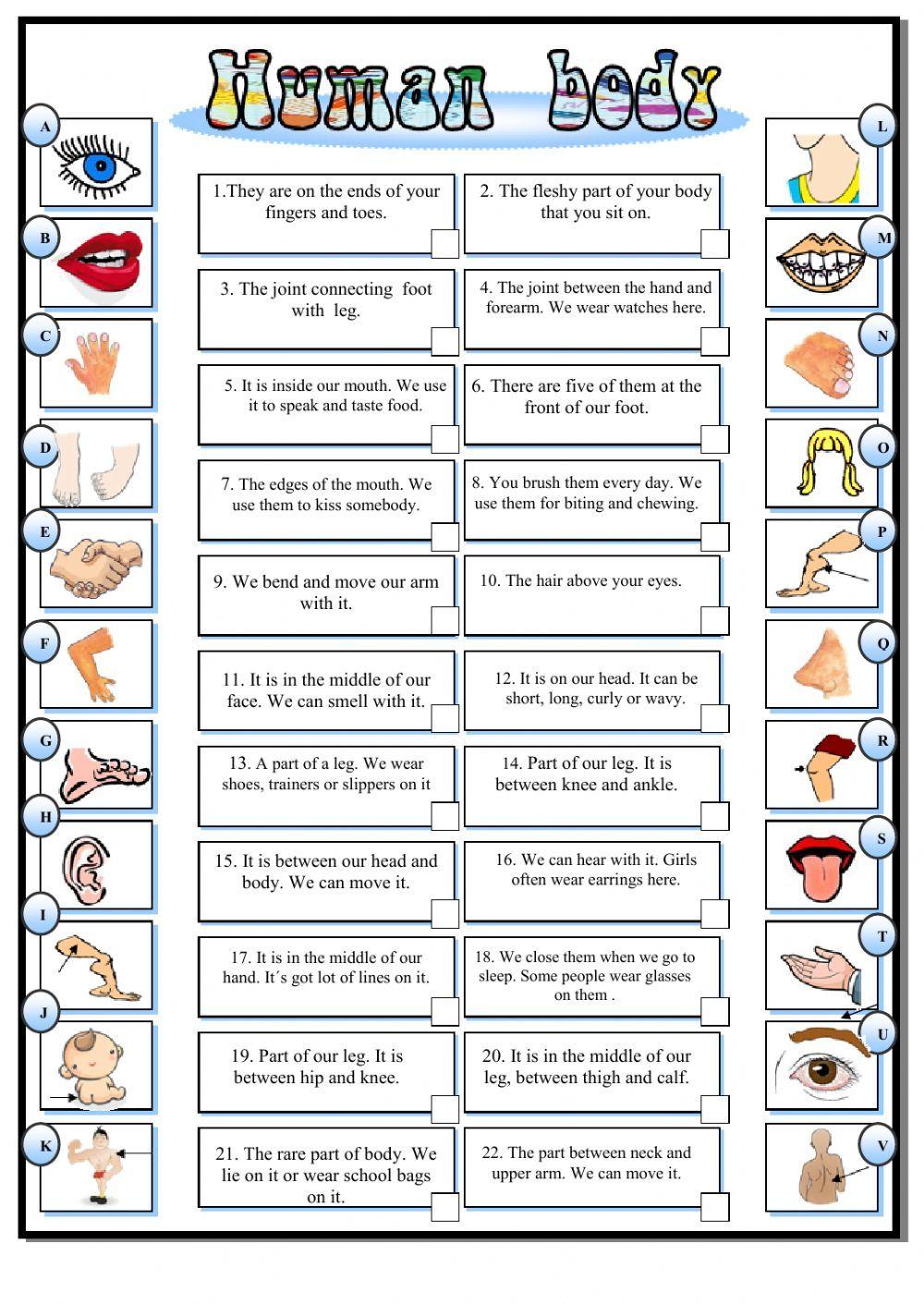 My Body Interactive Worksheet English Activities For Kids Vocabulary Worksheets English Activities [ 1411 x 1000 Pixel ]