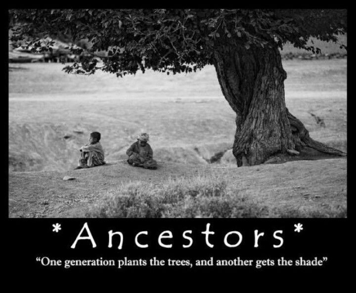 "Quotes: ""Ancestors - one generation plants the trees, and another gets the shade."" #genealogy #quotes"