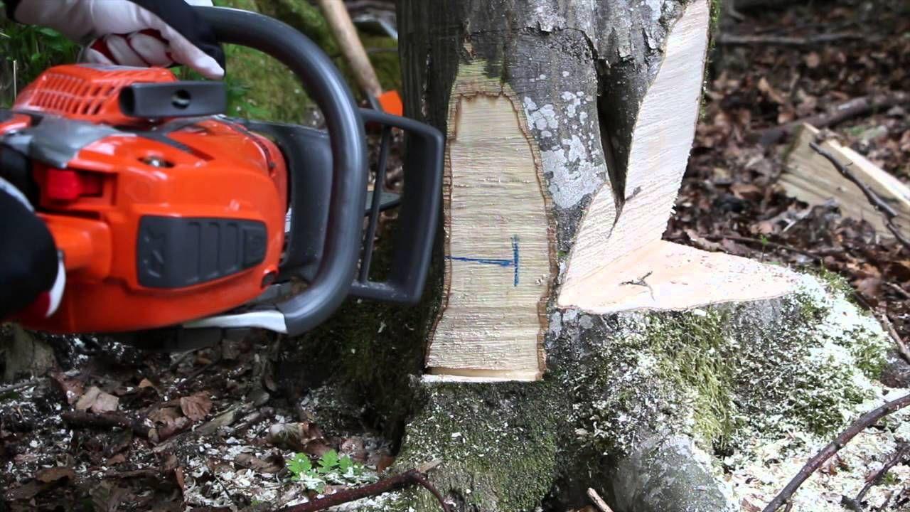 baum f llen sicher und richtig teil 2 versetzter f llschnitt f r b logging waldarbeit. Black Bedroom Furniture Sets. Home Design Ideas