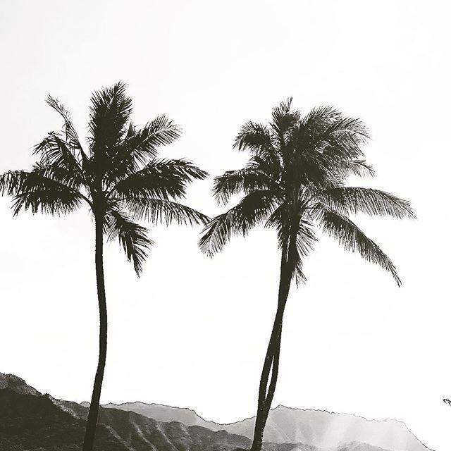 PC: @ohanashophawaii 🤙🏼🌺🌴 🖤Home Sweet Home🖤 🔥🔥🔥Hawaii Luau Company- Hawaii's Premiere Corporate Event, Luau, Wedding and Entertainment Company.  www.hawaiiluaucompany.com  #hawaiiluaucompany#huakailuau #huakai #napilicoast🌺 #kauaiisland #kauaibeaches #kauaiphotography #napili #princeville #snorkelhawaii #kauai #kauaibound #hawaiilove #kauaiweddingplanner #kauaievents #hawaiibuilt #kauaiielopment #hawaiiivibes #kauailuau #luauinkauai #poipu #luau #kapaa🌴 #visithawaii #kauaistyle #kau