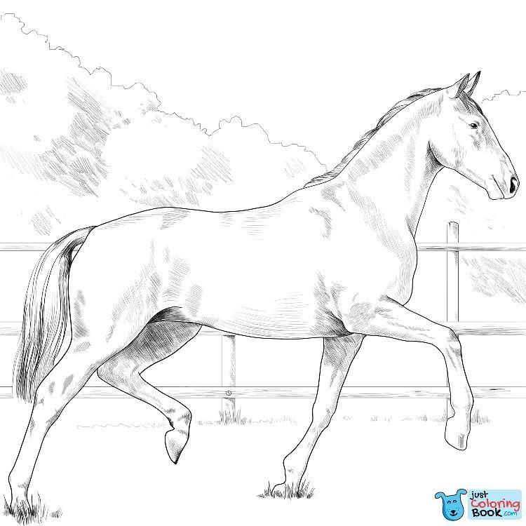 oldenburg horse coloring pages  malvorlagen pferde