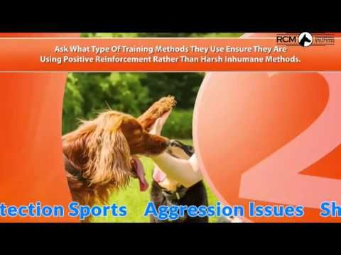 Http Www Rcmdogtraining Com Dog Training Obedience Training