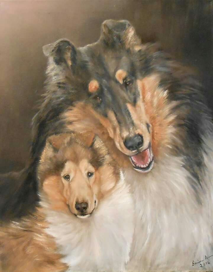 Collie Painting By Barbara Guitas Shetland Sheepdog Collie Dog